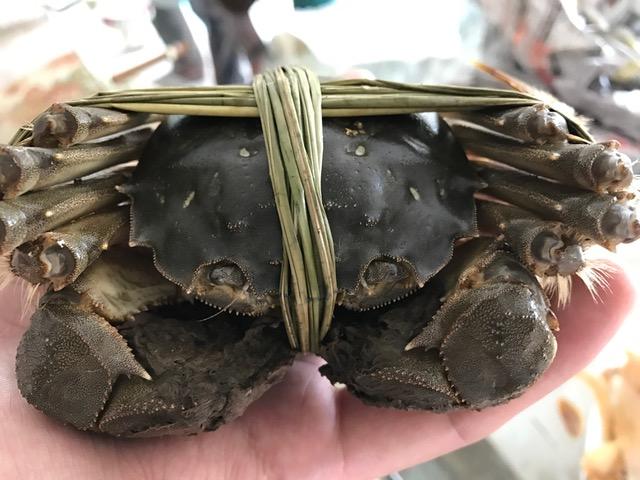 crabe-vert